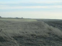 Looking-South-at-West-edge-of-pasture