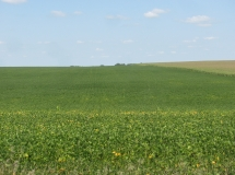 Tract #1-Soybeans